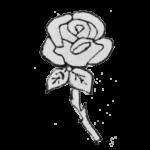 Rose White (+R350.00)